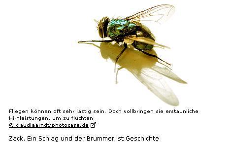 brummer.JPG